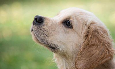 Russia has begun vaccinating animals against COVID-19