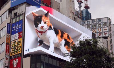 A new giant kitten on a billboard in Japan.